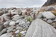 Smooth granite boulders on the coast of Vaeroy Island, Lofoten Islands, Norway.