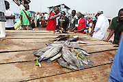 Fishermen come ashore to sell their day's catch at the local market in Ggaba, a small town in southern Uganda that almost entirely subsists on the fishing industry from selling still wriggling fish to peddling dried fish skins and smoked fish heads. The locals have contributed to the dangerous overfishing of the lake despite strict regulations from Tanzania, Uganda, and Kenya. Fishermen continue to keep fish that are far below the required minimum weight and employ dymanite and poison.