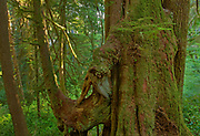 Temperate rain forest <br />