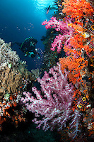 Photographer and Colorful Soft Corals..Shot in West Papua Province, Indonesia