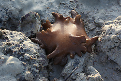 A leather coral on the rocks at Cable Beach on Broome's super low tide on the 22nd March 2011.