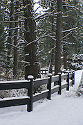 Idaho, Hayden. A fence through the pine trees and snow  in winter. PLEASE CONTACT US FOR DIGITAL DOWNLOAD AND PRICING.