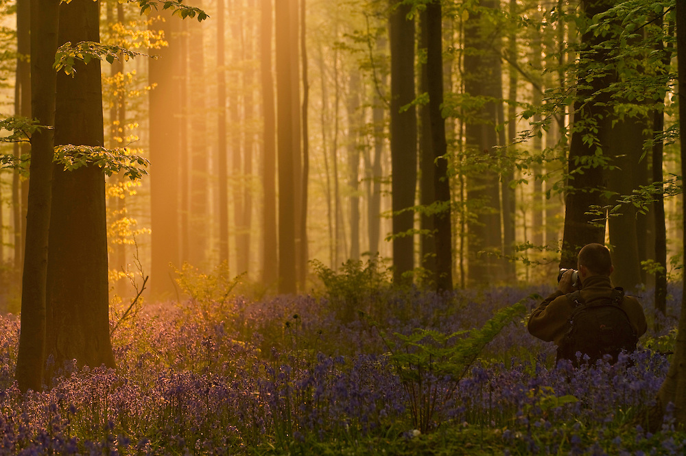 Photographer Moes Philippe catching glorious dawn light in Hallerbos forest, Belgium