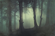 Mysterious misty forest scene on a fall morning<br />