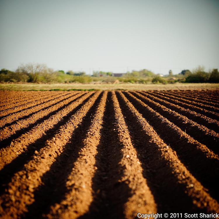 I found these fields not far from downtown Phoenix, Arizona.