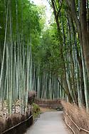 The Arashiyama Bamboo Grove in Arashiyama outside Kyoto,  Japan