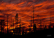 Fiery clouds fil the evening sky over an area of forest partially burned by the Steamboat Fire in Yosemite National Park, California.  The Steamboat fire started on August 7, 1990 and eventually destroyed 6,106 acres of woodland. Wildfires have historically been considered disasters, but it is now understood that fire is an integral component of forest life.  Naturally occurring fires thin the woodlands, increase sunlight to the forest floor, and allow for recycling of nutrients to the soil.  Thus, wildfires actually encourage the germination and regrowth of the forest plants and trees.
