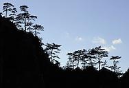 Dumbrava, Domogled National park, Southern Carpathians, Romania, Rewilding Europe site
