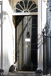 Downing Street, London, April 12th 2016. Larry the Downing Street cat outside the door of Number 10. <br /> ©Paul Davey<br /> FOR LICENCING CONTACT: Paul Davey +44 (0) 7966 016 296 paul@pauldaveycreative.co.uk