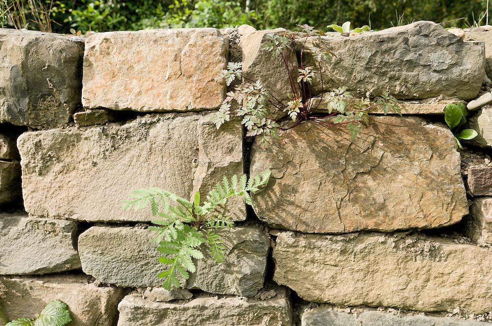 Nederland, Maastricht, 20110916..Lange muren van gestapelde natuurstenen met voldoende kieren en gaten zijn gemaakt voor de muurhagedis. De muren dienen voor de muurhagedis om zich op te warmen, zich in te verschuilen en in te overwinteren. .Daarnaast worden langs het hele spoortraject stevige houtstapels aangelegd waarin vooral de levendbarende hagedis en de hazelworm zich thuis voelen..In de muren groeien ook bijzondere planten en varens.Goederenlijn Maastricht naar Lanaken in Belgie. .De spoorlijn tussen Maastricht en Lanaken is met subsidie van de Europese Unie opgeknapt. Ingebruikname zal volgens onderzoek direct tot een modal shift leiden van een half miljoen ton lading ten gunste van het spoor. Hoofdverantwoordelijke is de papierfabriek Sappi met vestigingen in zowel Maastricht als Lanaken. .Freights line Maastricht to Lanaken in Belgium. The restoration of the railway line between Lanaken and Maastricht is funded by the European Union. Sappi paper mill is the main user of this line. They have mills both Lanaken and Maastricht. ?