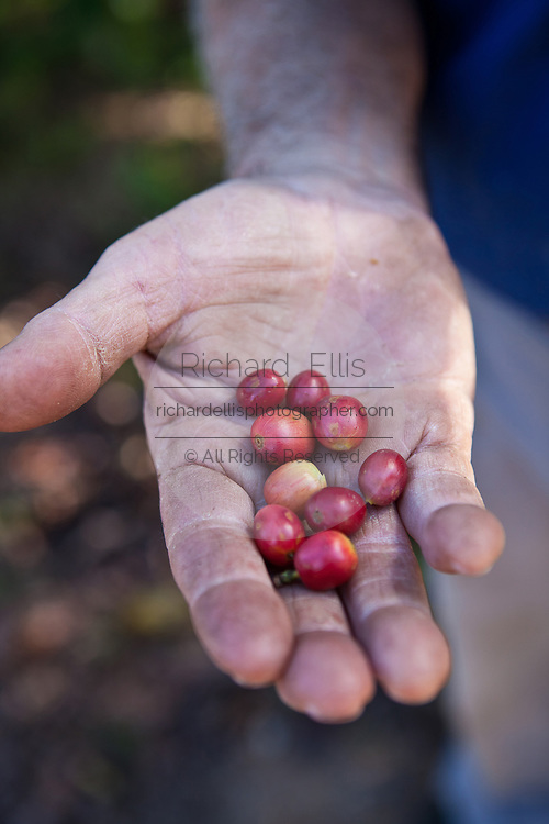 Coffee production at the Sandra Farms plantation in Adjuntas, Puerto Rico.