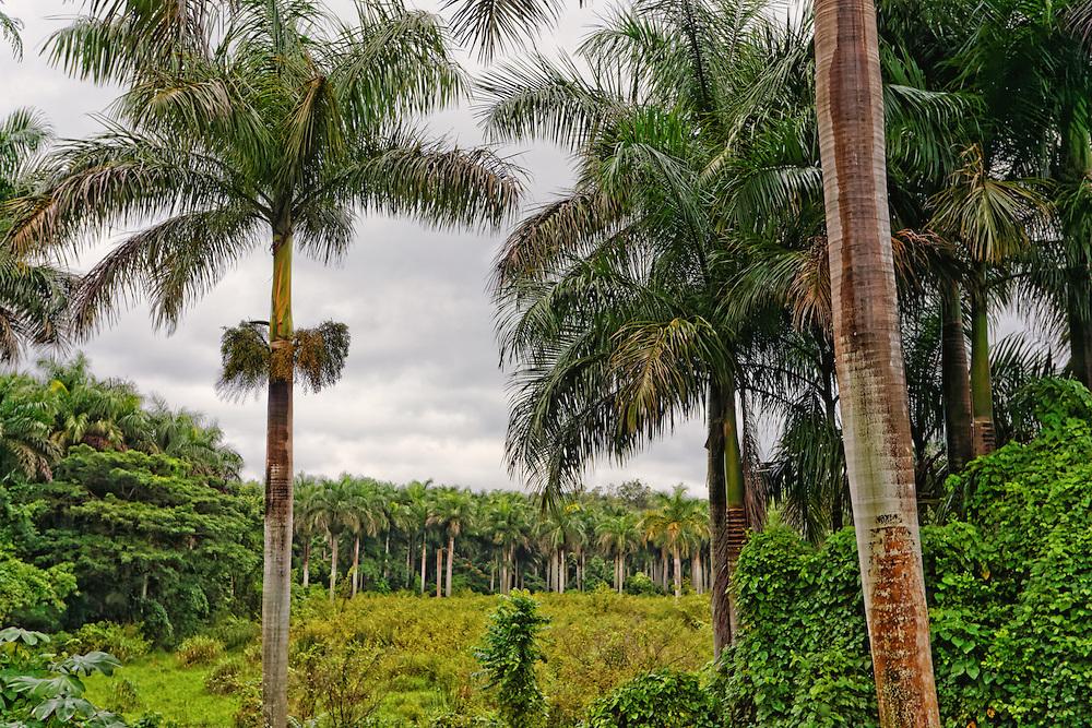 Artemisa, Cuba.
