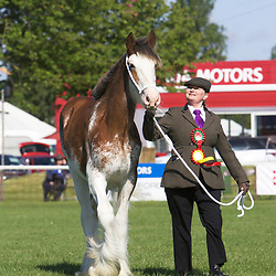 Notts County Show 2017 Clydesdales