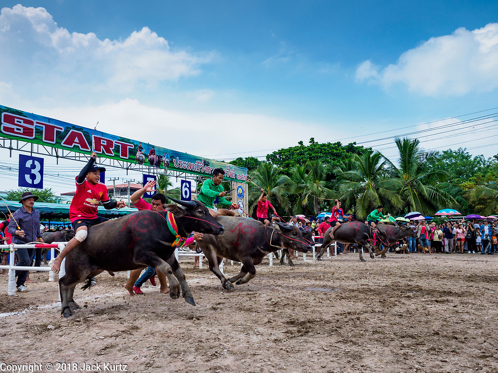 23 OCTOBER 2018 - CHONBURI, CHONBURI, THAILAND:  The start of the a water buffalo race in Chonburi. Contestants race water buffalo about 100 meters down a muddy straight away. The buffalo races in Chonburi first took place in 1912 for Thai King Rama VI. Now the races have evolved into a festival that marks the end of Buddhist Lent and is held on the first full moon of the 11th lunar month (either October or November). Thousands of people come to Chonburi, about 90 minutes from Bangkok, for the races and carnival midway.   PHOTO BY JACK KURTZ