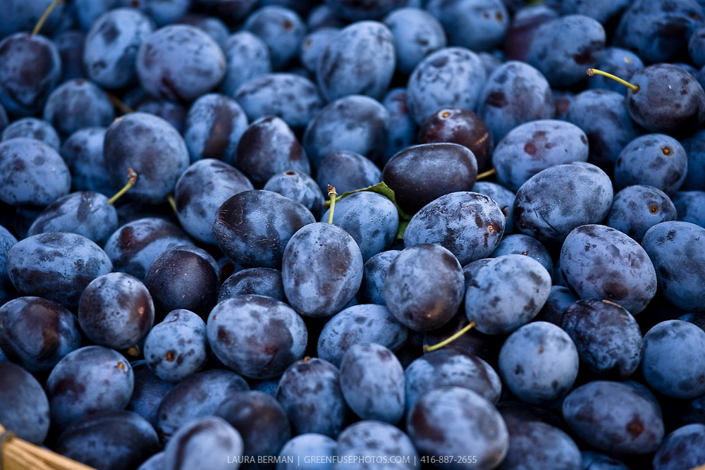 A basketful of purple plums.