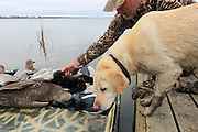 A successful hunter unloads the boat with his Yellow Labrador Retriever during a Manitoba hunt.