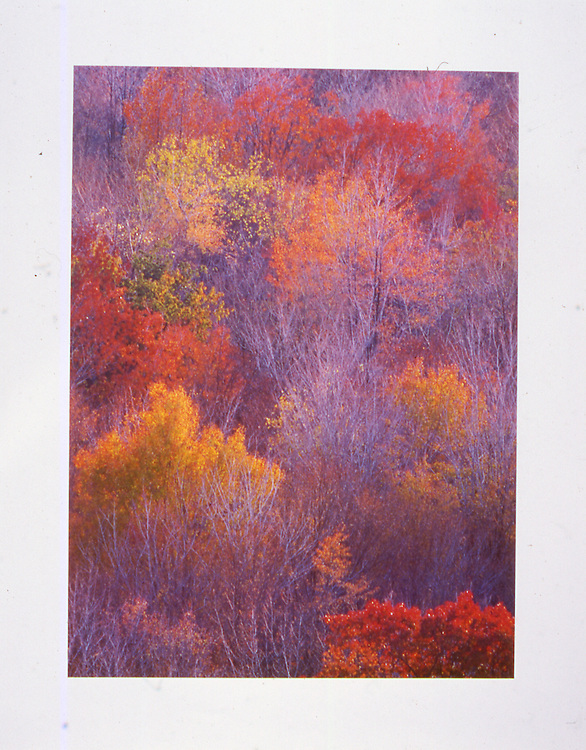 Autographed Limited Edition Print of autumn leaves in Pennsylvania. White border.