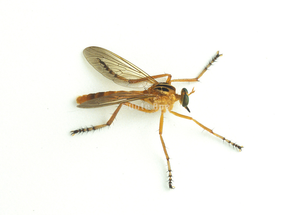 close up of winged insect
