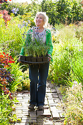 Carol Klein carrying tray of eryngiums and agapanthus ready to plant out into the garden