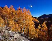 Fall colors near Durango, Colorado