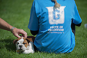A new bulldog puppy catches the attention of visitors during New Student Orientation 2012. <br />
