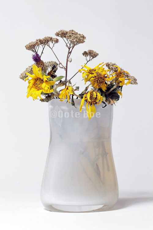 various dying wildflowers in a vase