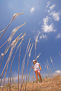 Young girl of 6 plays in a field of flowering Sea Squill, (Drimia maritima). Photographed in Israel, autumn September