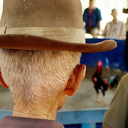 CHIANG RAI - MARCH 5 2006: An older gentleman watches a cockfight in Chaing Rai, Thailand. Activists brought up tales such as the legend that Thailand was created by Thai Princes's win over a Burmese Rooster. Bird Flu caused the banning of cock fights in 2005, but a persistent movement of Thai's claiming the social significance of the sport and a reduction in Bird Flu cases has allowed the fights to resume. (Photo by Logan Mock-Bunting)