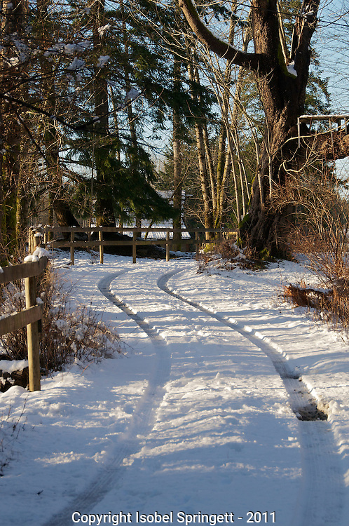 Late Winter Sun., Courtenay, British Columbia, Canada, Isobel Springett