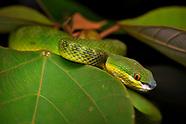 Hong Kong - Reptiles & amphibians