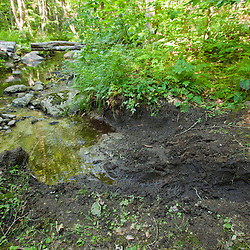 ATV tracks on a stream bank in a hardwood forest on Black Mountain in Sutton, New Hampshire.