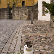 Cat sitting in a cobbled street in  the historical village of Culross, West Fife, Scotland<br />