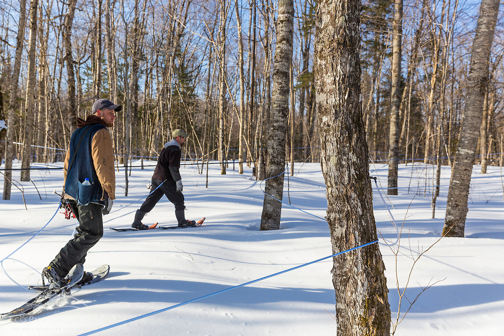 Jean Francois Faucher and Vincent LaRiviere checking the sap lines and taps on the LaRiviere sugarbush in Big Six Township, Maine. This property has more than 300,000 maple syrup taps and produces 3 - 4 percent of the US maple syrup crop.