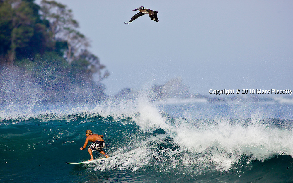 """SHOT 1/11/10 10:02:19 AM - Surfer Felipe Hernandez of Sayulita, Mexico surfs on a wave a pelican flies overhead. Sayulita is a small fishing village about 25 miles north of downtown Puerto Vallarta in the state of Nayarit, Mexico, with a population of approximately 4,000. Known for its consistent river mouth surf break, roving surfers """"discovered"""" Sayulita in the late 60's with the construction of Mexican Highway 200. In recent years, it has become increasingly popular as a holiday and vacation destination, especially with surfing enthusiasts and American and Canadian tourists. (Photo by Marc Piscotty / © 2009)"""