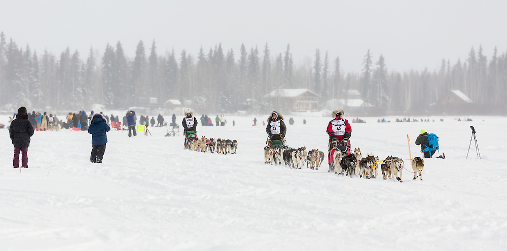 Mushers Jan Steves, Laura Allaway, and Becca Moore competing in the 43rd Iditarod Trail Sled Dog Race on the Chena River after leaving the restart in Fairbanks in Interior Alaska.  Afternoon. Winter.