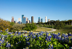 Western view of the Houston, Texas skyline in Spring featuring Buffalo Bayou Park with Bluebonnets in the foreground.