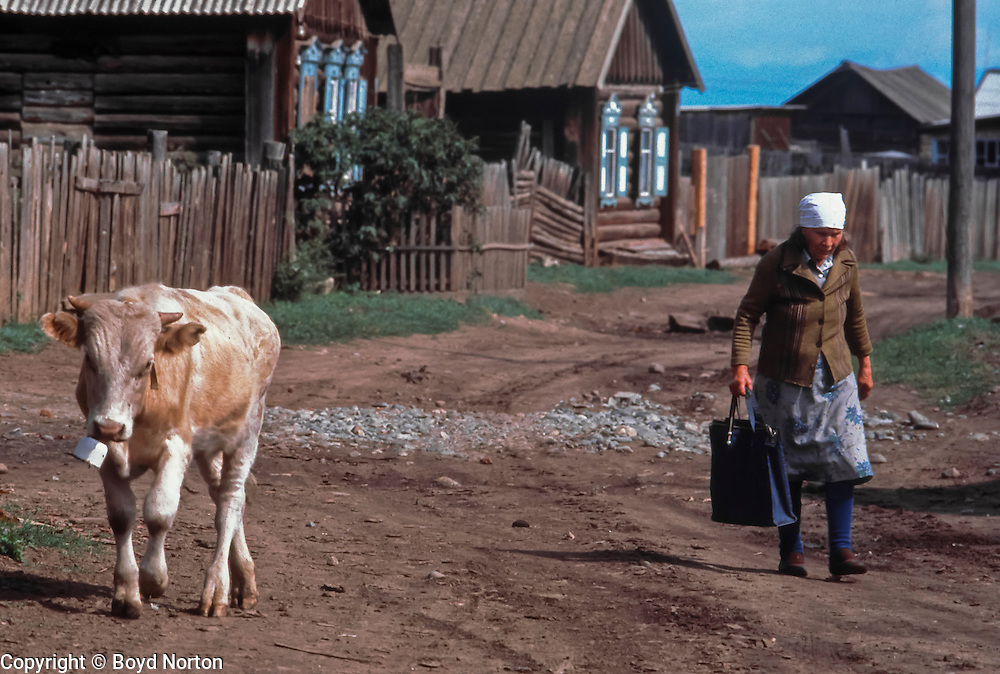 Life in the Siberian fast lane; babushka and cow, village of Baikalskoye near northern tip of Baikal