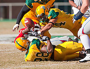 Norfolk State's Onyemechi Anyaugo (28) and Corwin Hammond (34) force this Delaware State fumble during their 31 - 21 victory at Dick Price Stadium on the campus of Norfolk State University in Norfolk, Virginia.  (Photo by Mark W. Sutton)
