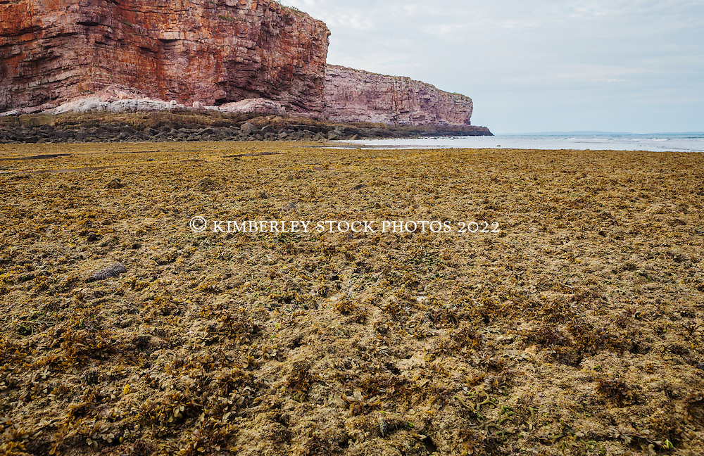 An algal reef is exposed at low tide at Macleay Island on the Kimberley coast.