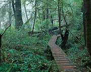boardwalk, rainforest<br />