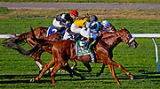 Main Sequence (on the outside( wins a three horse photo in the Joe Hirsch Handicap on the grass at Belmont Park on September 27, 2014.