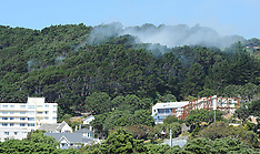 Wellington-Scrub fire in Mt Victoria shelter belt