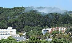 Wellington-Scrub fire in Mt Victoria shelter belt