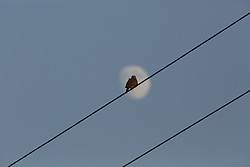 Bird on a wire near McConnell's Springs, Wednesday, Aug. 26, 2015 at McConnell's Spring in Lexington .