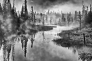 Trees in fog  over wetland at sunrise <br />