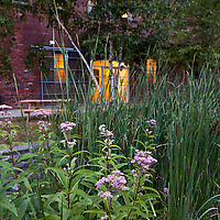 Landscaping with native plants: Joe-Pye Weed ( Eupatorium), Cattails ( Typha), River Birch (Betula nigra)