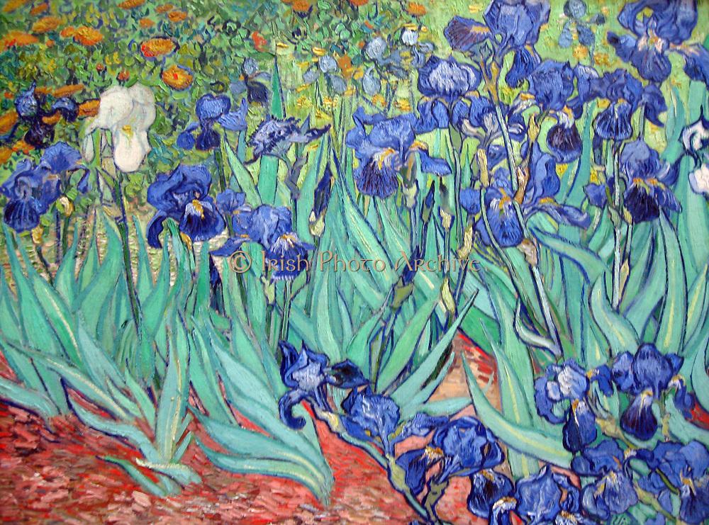 Irises is a painting by Vincent van Gogh 1853 – 1890, Dutch post-Impressionist painter. Irises was painted while Vincent van Gogh was living at the asylum at Saint Paul-de-Mausole in Saint-Rémy-de-Provence, France, in 1890