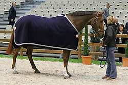 Sapphire and groom Erica McKeever<br /> Pressconference concerning disqualification of McLain Ward's horse Sapphire due to a positive Hypersensitivity test after the second competion of the Rolex FEI World Cup Final - Geneve 2010<br /> also in this picture Jan Tops, Michael Withaker<br /> © Dirk Caremans