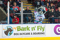 KELOWNA, CANADA - DECEMBER 3: Rocky Racoon, the mascot of the Kelowna Rockets stands at the glass on December 3, 2016 at Prospera Place in Kelowna, British Columbia, Canada.  (Photo by Marissa Baecker/Shoot the Breeze)  *** Local Caption ***
