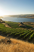 Maryhill Vineyard with view down the Gorge, Columbia Gorge AVA, Washington